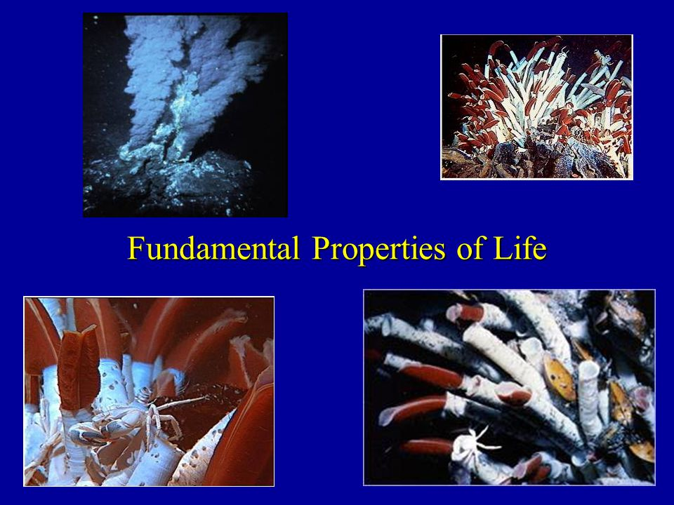 Fundamental Properties of Life