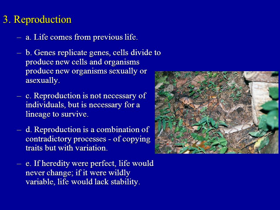 3. Reproduction –a. Life comes from previous life. –b. Genes replicate genes, cells divide to produce new cells and organisms produce new organisms se