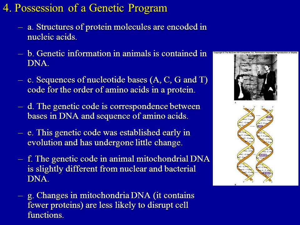 4. Possession of a Genetic Program –a. Structures of protein molecules are encoded in nucleic acids. –b. Genetic information in animals is contained i