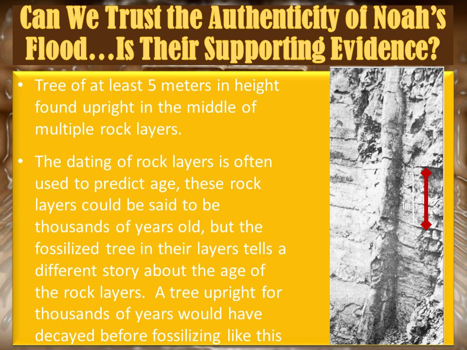 Tree of at least 5 meters in height found upright in the middle of multiple rock layers. The dating of rock layers is often used to predict age, these