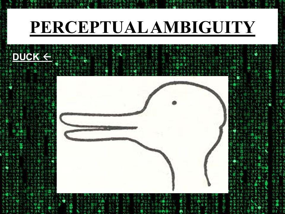 PERCEPTUAL AMBIGUITY DUCK 
