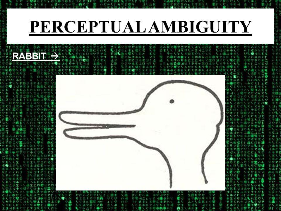 PERCEPTUAL AMBIGUITY RABBIT 