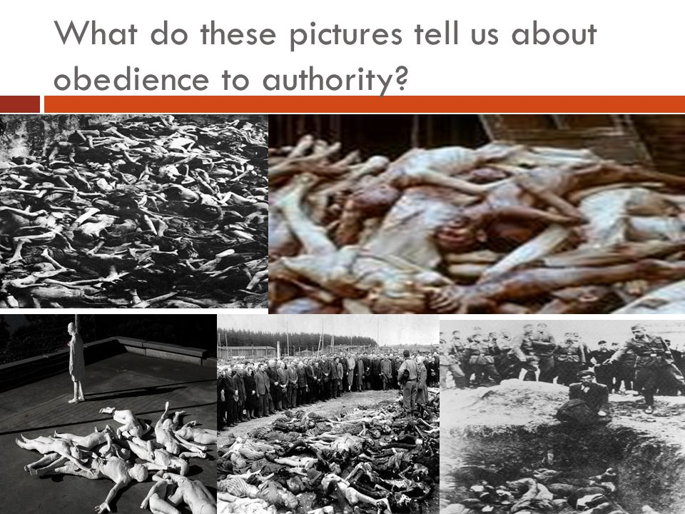 What do these pictures tell us about obedience to authority?