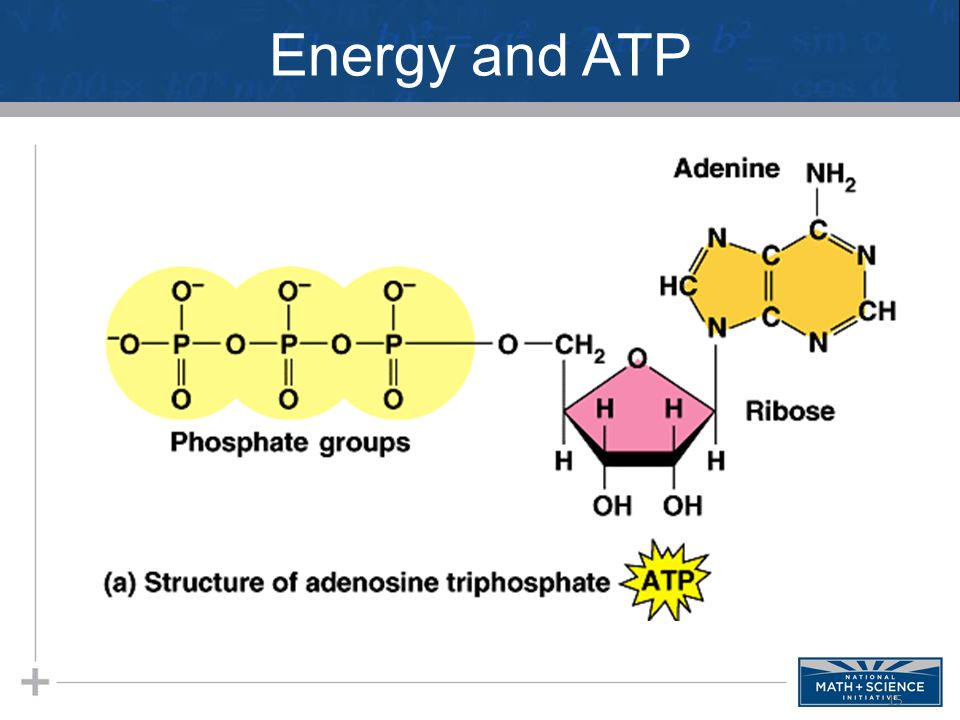 Energy and ATP 15
