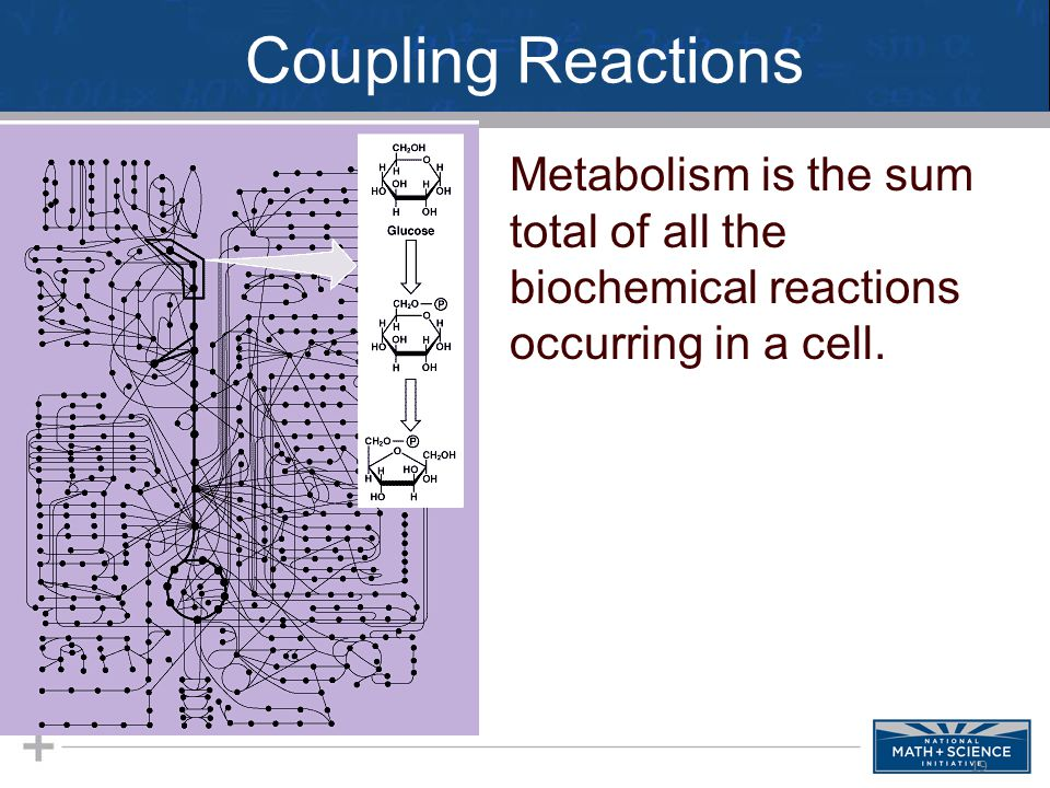Coupling Reactions Metabolism is the sum total of all the biochemical reactions occurring in a cell. 19