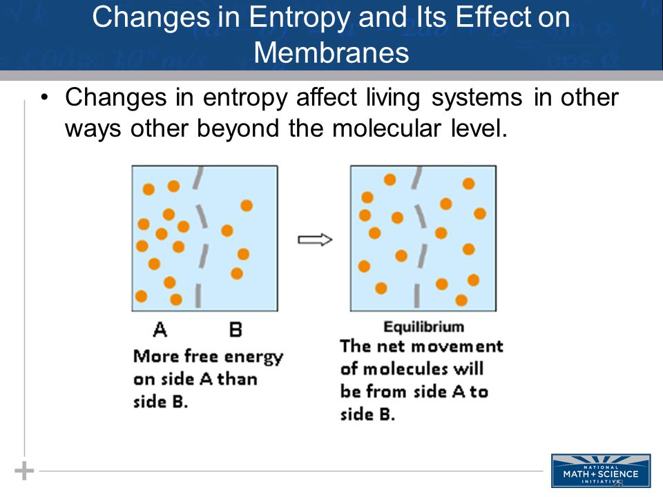 Changes in Entropy and Its Effect on Membranes Changes in entropy affect living systems in other ways other beyond the molecular level.