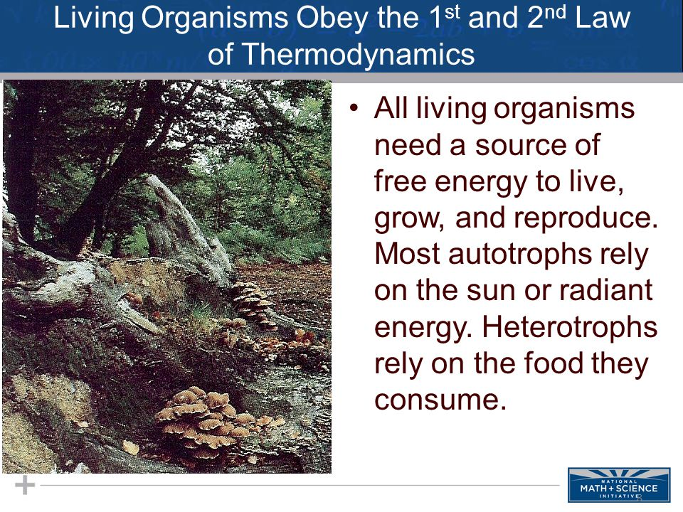Living Organisms Obey the 1 st and 2 nd Law of Thermodynamics All living organisms need a source of free energy to live, grow, and reproduce. Most aut
