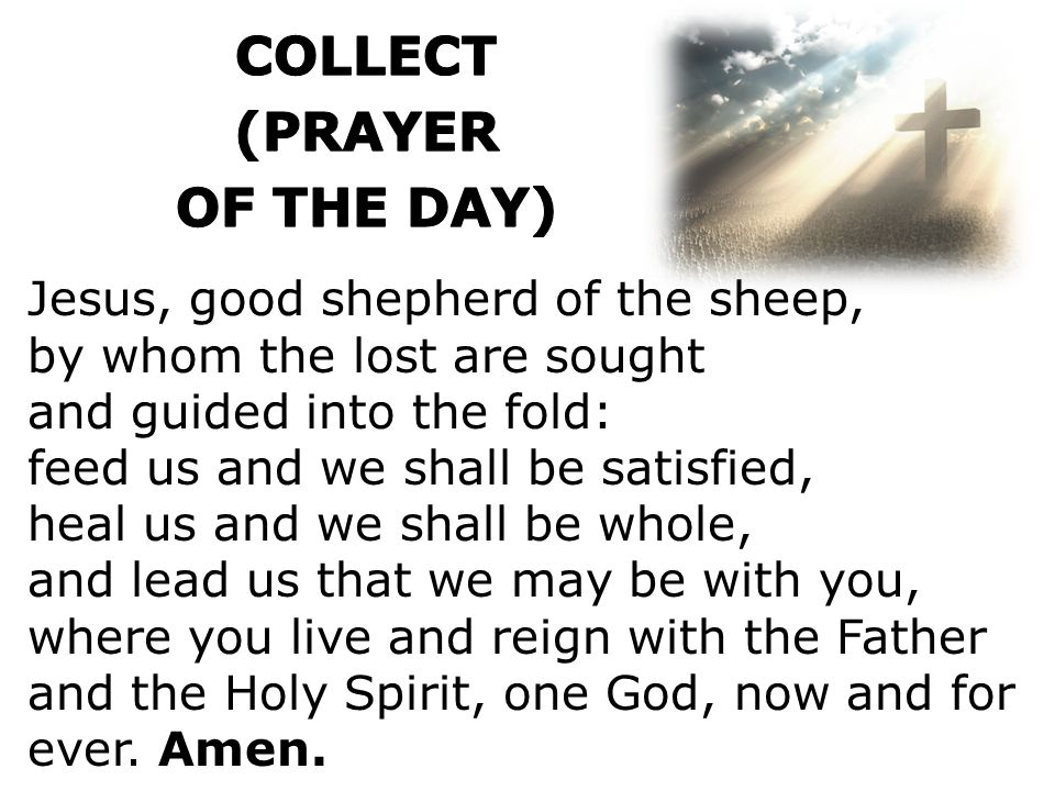 Jesus, good shepherd of the sheep, by whom the lost are sought and guided into the fold: feed us and we shall be satisfied, heal us and we shall be whole, and lead us that we may be with you, where you live and reign with the Father and the Holy Spirit, one God, now and for ever.