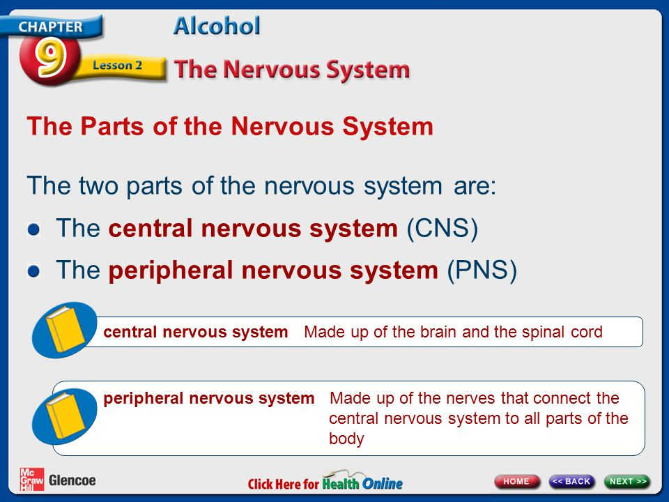 The Parts of the Nervous System The two parts of the nervous system are: The central nervous system (CNS) The peripheral nervous system (PNS) central nervous system Made up of the brain and the spinal cord peripheral nervous system Made up of the nerves that connect the central nervous system to all parts of the body