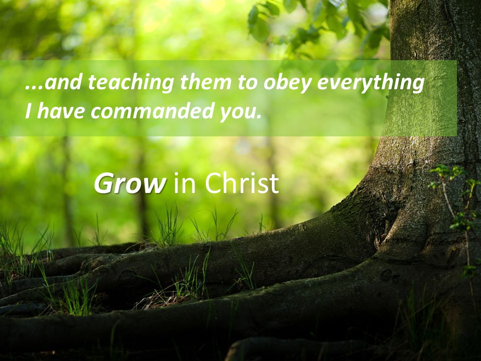 ...and teaching them to obey everything I have commanded you. Grow Grow in Christ