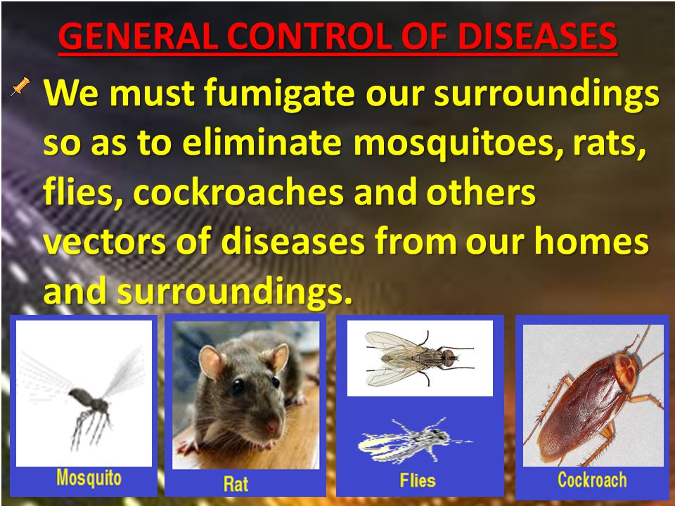 GENERAL CONTROL OF DISEASES We must fumigate our surroundings so as to eliminate mosquitoes, rats, flies, cockroaches and others vectors of diseases from our homes and surroundings.