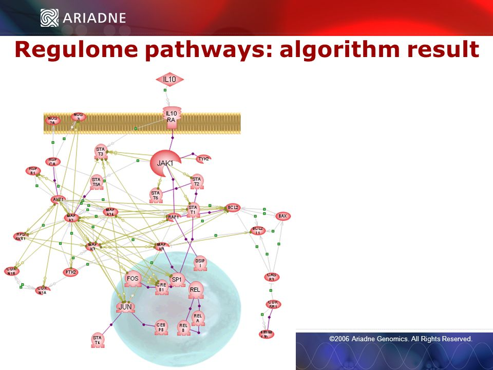 ©2006 Ariadne Genomics. All Rights Reserved. 53 ©2006 Ariadne Genomics.