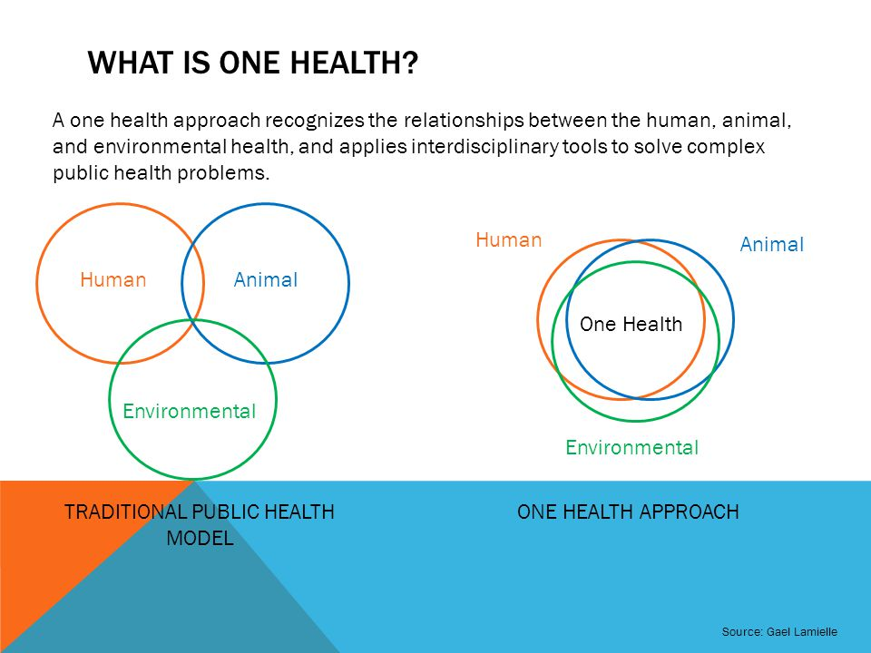 WHAT IS ONE HEALTH.