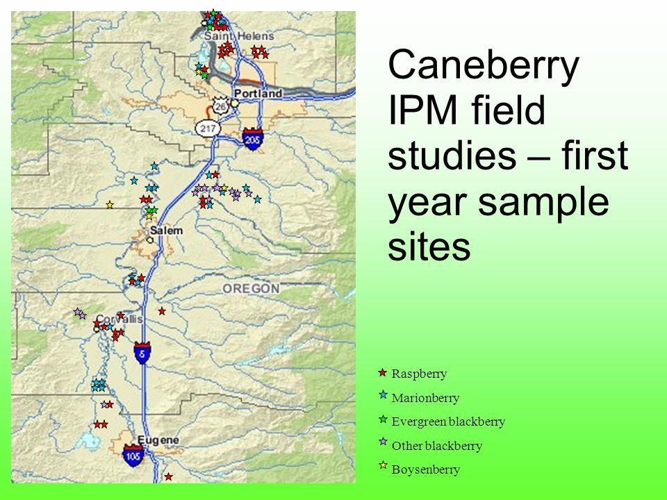 Raspberry Marionberry Evergreen blackberry Other blackberry Boysenberry Caneberry IPM field studies – first year sample sites