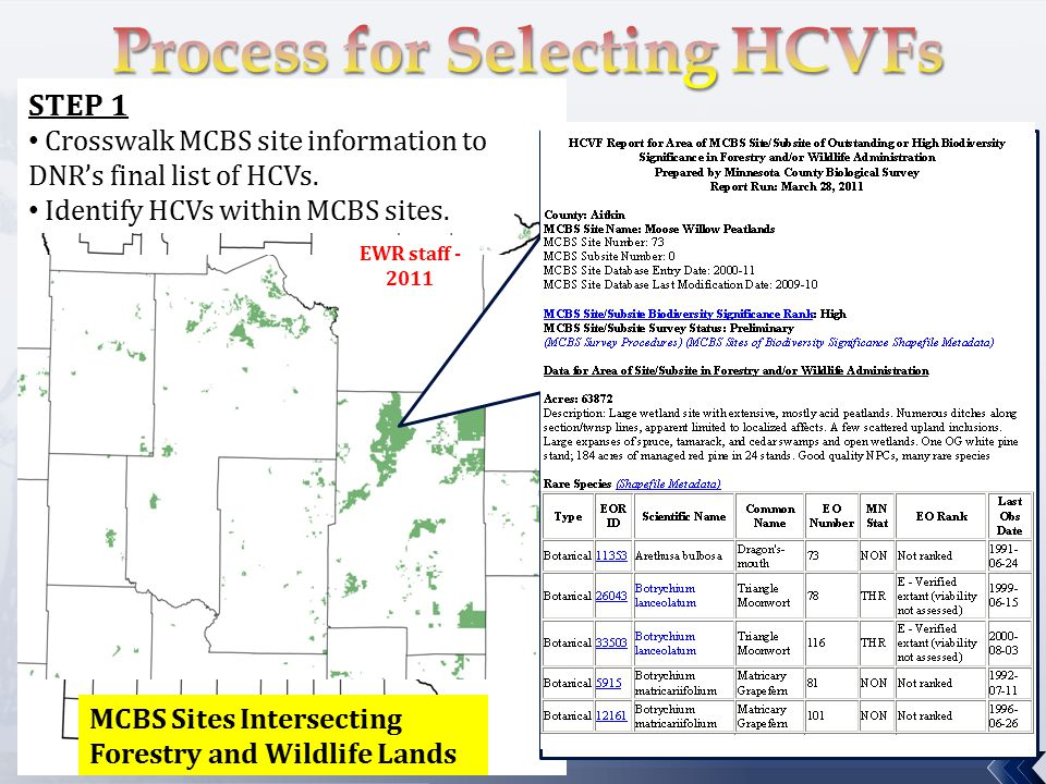 MCBS Sites Intersecting Forestry and Wildlife Lands STEP 1 Crosswalk MCBS site information to DNR's final list of HCVs.
