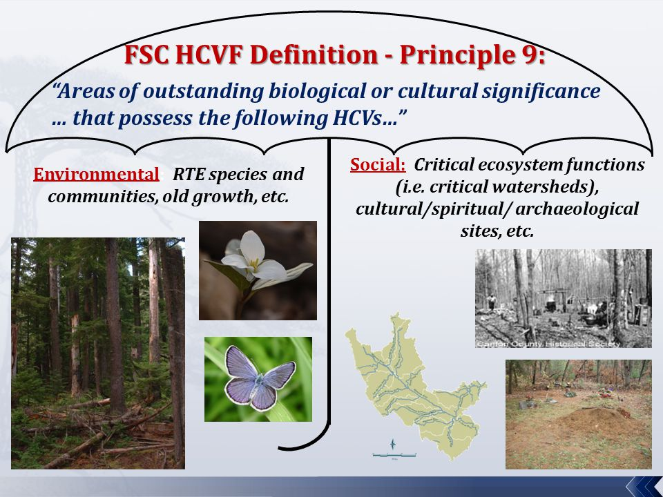 HCV Category 1 – Biodiversity Values:  Forest areas containing globally, nationally, or regionally significant concentrations of biodiversity values. Always includes:  G1 & G2 (globally critically imperiled or imperiled) species  S1 & S2 (state endangered or threatened) species  Federal endangered or threatened species May include:  Federal candidate or proposed State T&E species  Regionally significant concentrations of rare species  Significant concentrations of rare species within the same taxonomic group  Outstanding examples of Key Habitats for SGCNs  Regionally significant = Determined at ECS Section  Rare Species = Species designated as special concern or SGCNs.