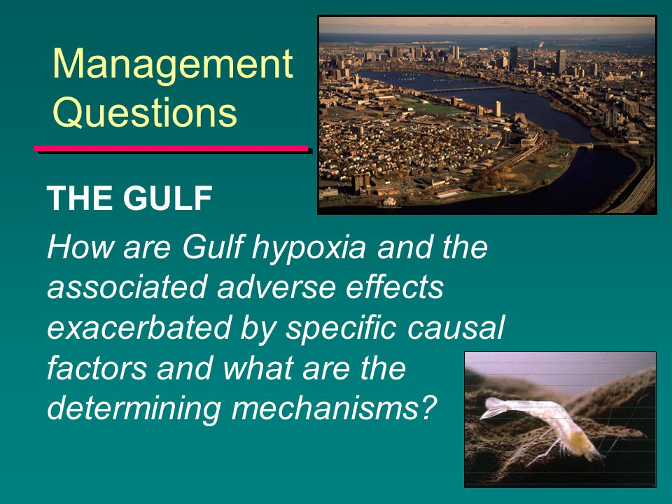 Management Questions THE GULF How are Gulf hypoxia and the associated adverse effects exacerbated by specific causal factors and what are the determining mechanisms?