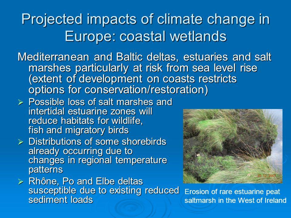 Projected impacts of climate change in Europe: coastal wetlands Mediterranean and Baltic deltas, estuaries and salt marshes particularly at risk from sea level rise (extent of development on coasts restricts options for conservation/restoration)  Possible loss of salt marshes and intertidal estuarine zones will reduce habitats for wildlife, fish and migratory birds  Distributions of some shorebirds already occurring due to changes in regional temperature patterns  Rhône, Po and Elbe deltas susceptible due to existing reduced sediment loads Erosion of rare estuarine peat saltmarsh in the West of Ireland