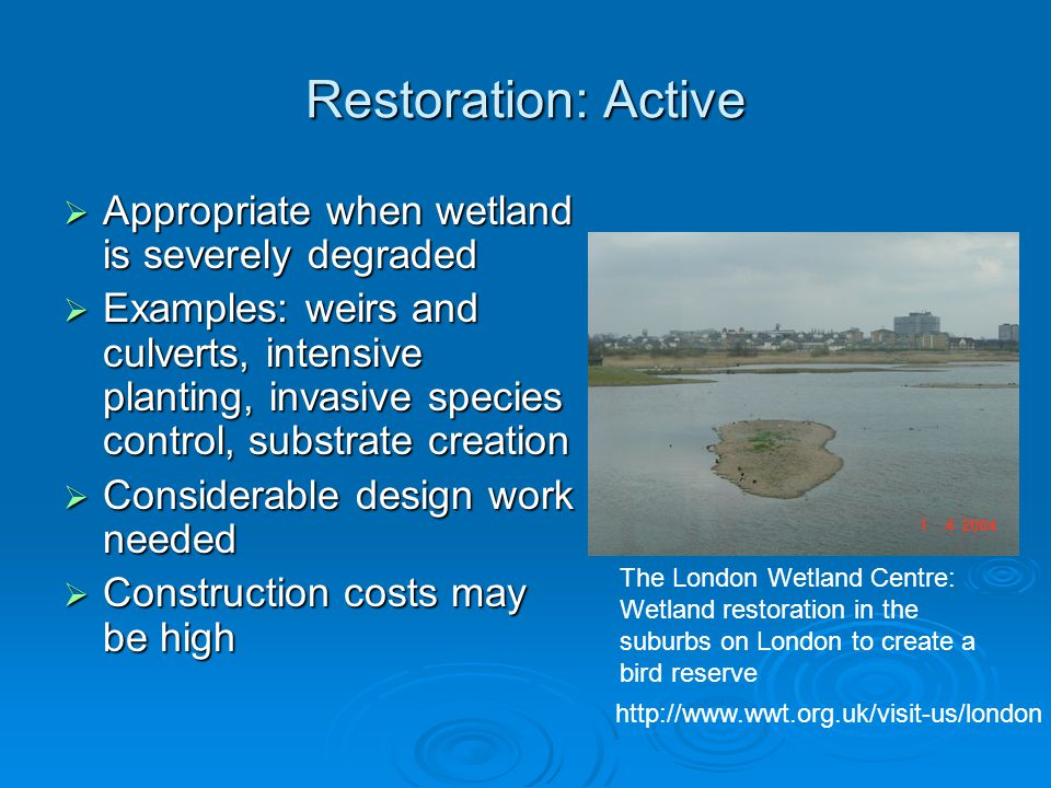 Restoration: Active  Appropriate when wetland is severely degraded  Examples: weirs and culverts, intensive planting, invasive species control, subs