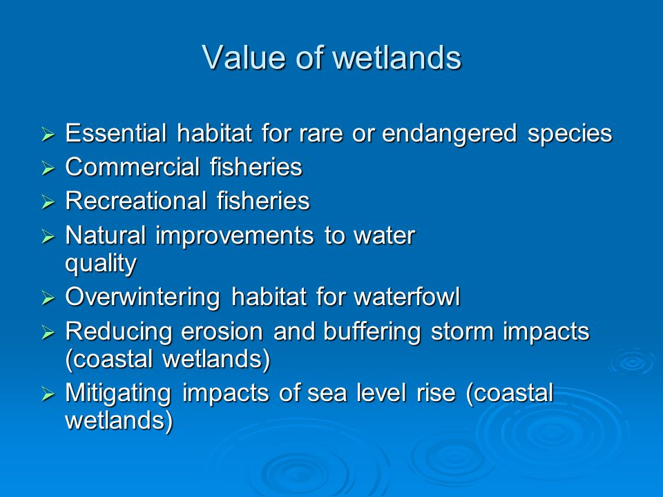 Value of wetlands  Essential habitat for rare or endangered species  Commercial fisheries  Recreational fisheries  Natural improvements to water q