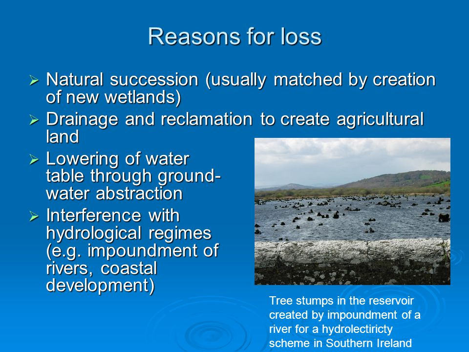 Reasons for loss  Natural succession (usually matched by creation of new wetlands)  Drainage and reclamation to create agricultural land  Lowering of water table through ground- water abstraction  Interference with hydrological regimes (e.g.