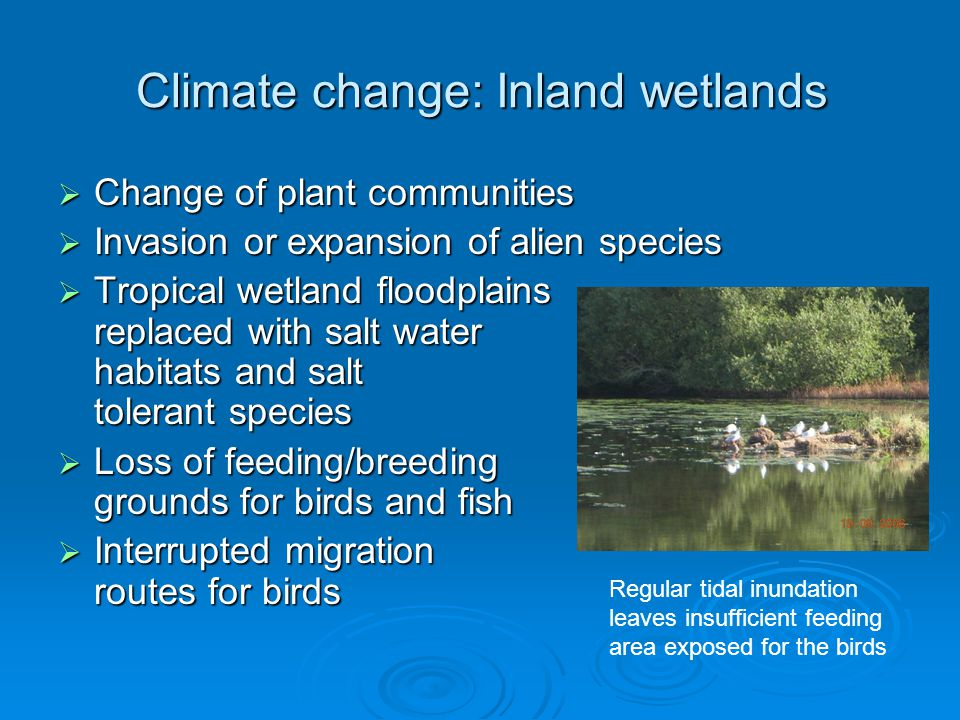 Climate change: Inland wetlands  Change of plant communities  Invasion or expansion of alien species  Tropical wetland floodplains replaced with sa
