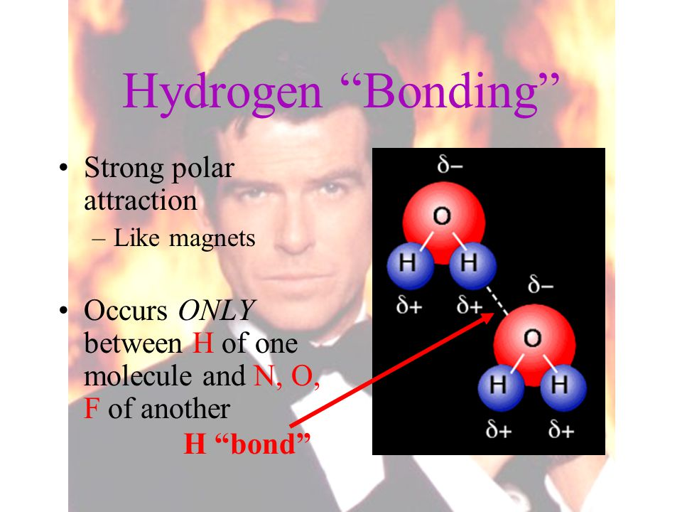 "Hydrogen ""Bonding"" Strong polar attraction –Like magnets Occurs ONLY between H of one molecule and N, O, F of another H ""bond"""
