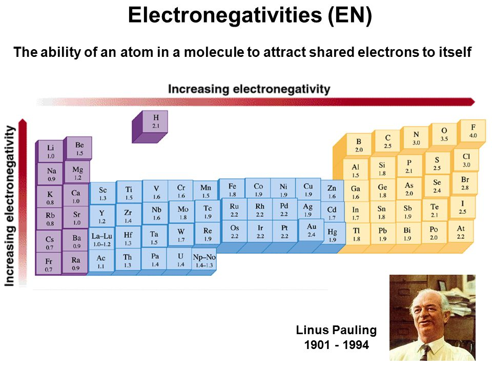 22 Electronegativities (EN) The ability of an atom in a molecule to attract shared electrons to itself Linus Pauling 1901 - 1994