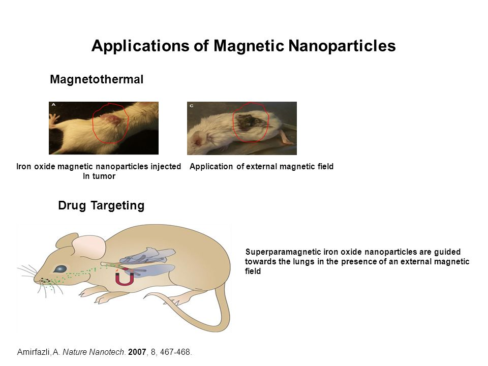 Applications of Magnetic Nanoparticles Iron oxide magnetic nanoparticles injected In tumor Application of external magnetic field Superparamagnetic ir