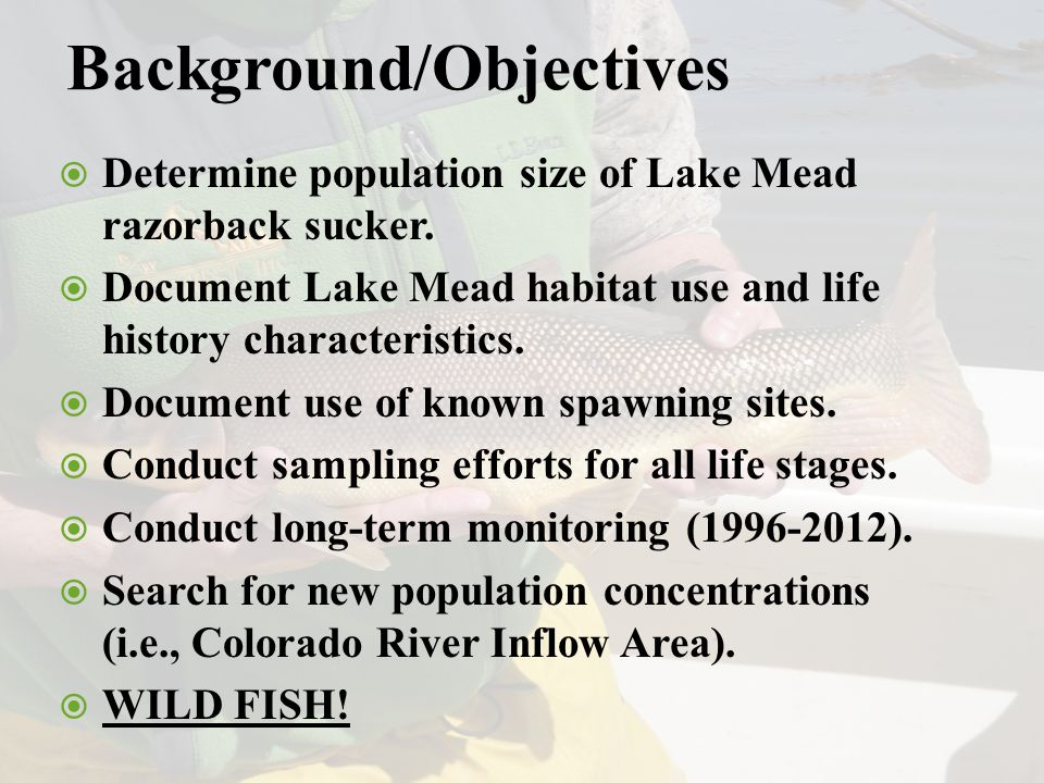 Background/Objectives  Determine population size of Lake Mead razorback sucker.