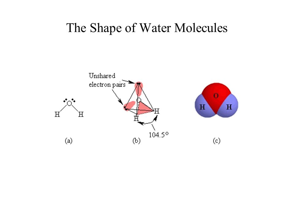 The Shape of Water Molecules