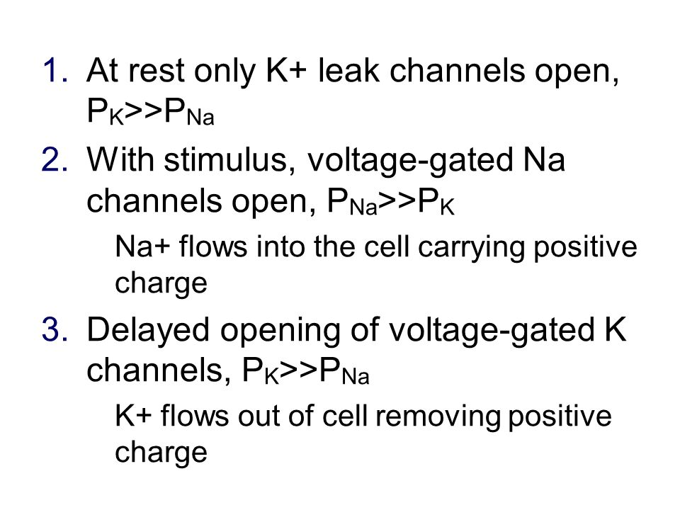 1.At rest only K+ leak channels open, P K >>P Na 2.With stimulus, voltage-gated Na channels open, P Na >>P K Na+ flows into the cell carrying positive charge 3.Delayed opening of voltage-gated K channels, P K >>P Na K+ flows out of cell removing positive charge