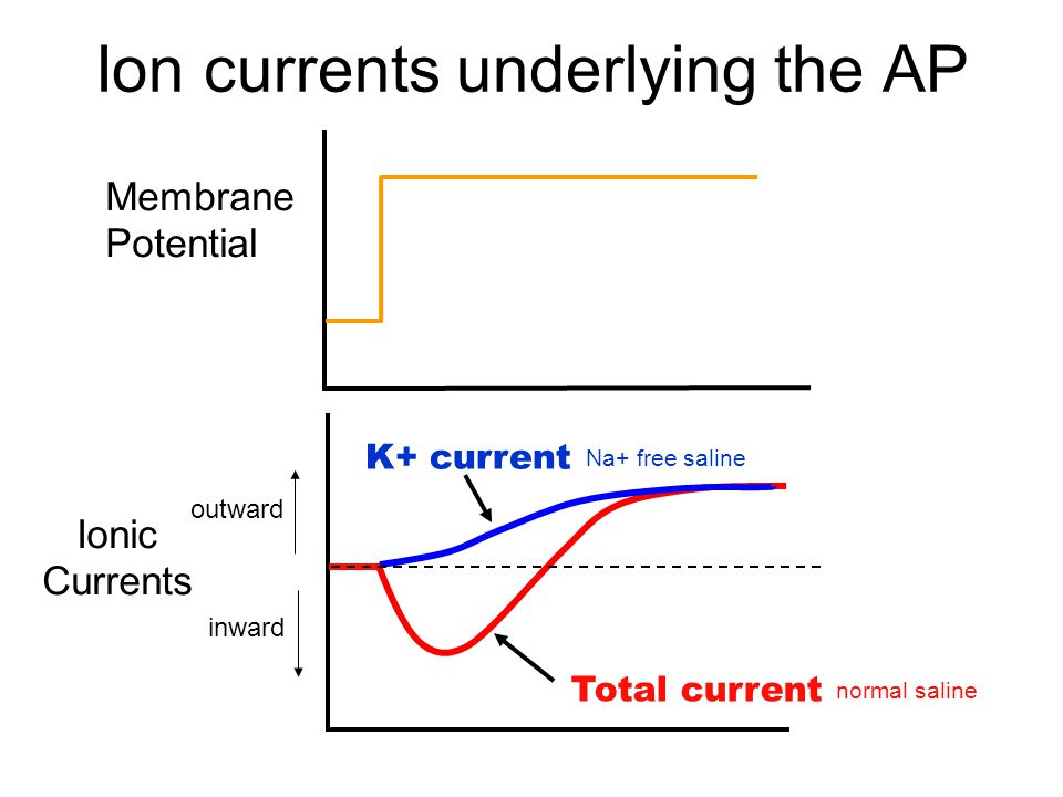 Ion currents underlying the AP Membrane Potential Ionic Currents Total current normal saline K+ current Na+ free saline outward inward
