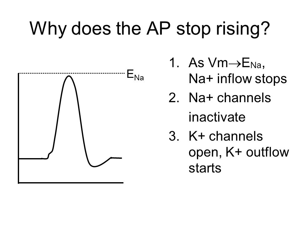 Why does the AP stop rising.