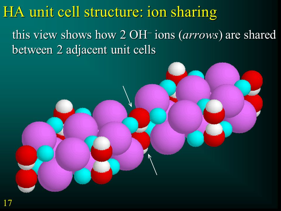 this view shows how 2 OH – ions (arrows) are shared between 2 adjacent unit cells this view shows how 2 OH – ions (arrows) are shared between 2 adjacent unit cells HA unit cell structure: ion sharing 17