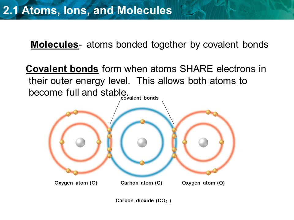 Covalent bonds form when atoms SHARE electrons in their outer energy level. This allows both atoms to become full and stable. covalent bonds Oxygen at
