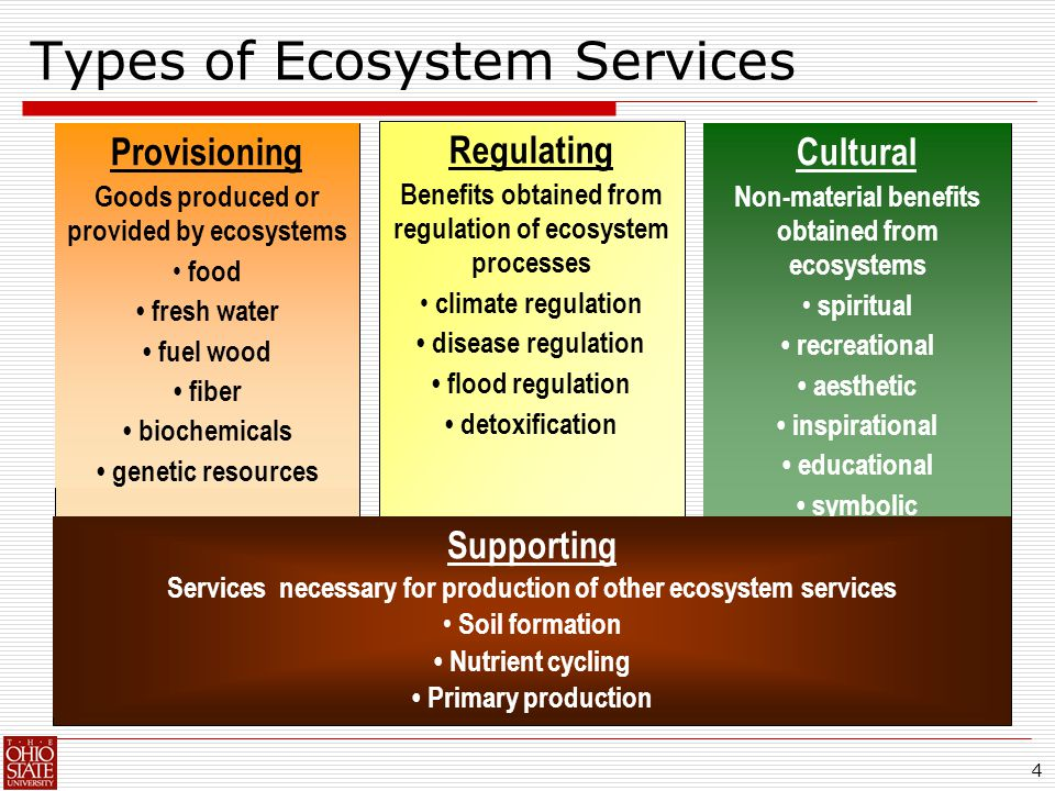 4 Types of Ecosystem Services Regulating Benefits obtained from regulation of ecosystem processes climate regulation disease regulation flood regulation detoxification Provisioning Goods produced or provided by ecosystems food fresh water fuel wood fiber biochemicals genetic resources Cultural Non-material benefits obtained from ecosystems spiritual recreational aesthetic inspirational educational symbolic Supporting Services necessary for production of other ecosystem services Soil formation Nutrient cycling Primary production