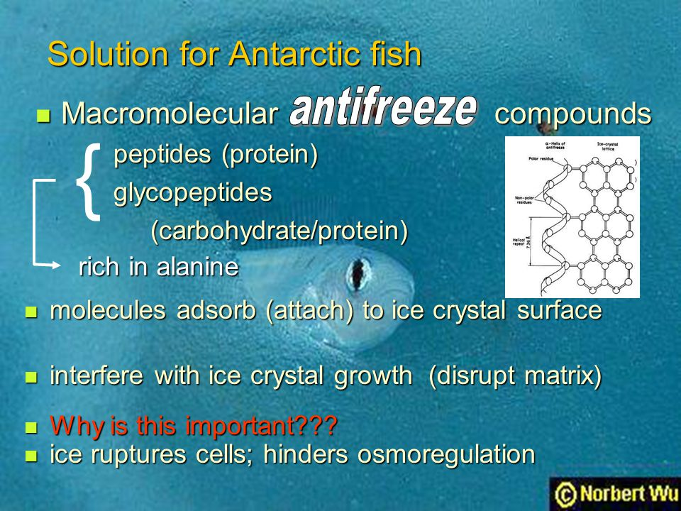 Solution for Antarctic fish Macromolecular compounds Macromolecular compounds peptides (protein) peptides (protein) glycopeptides glycopeptides (carbo