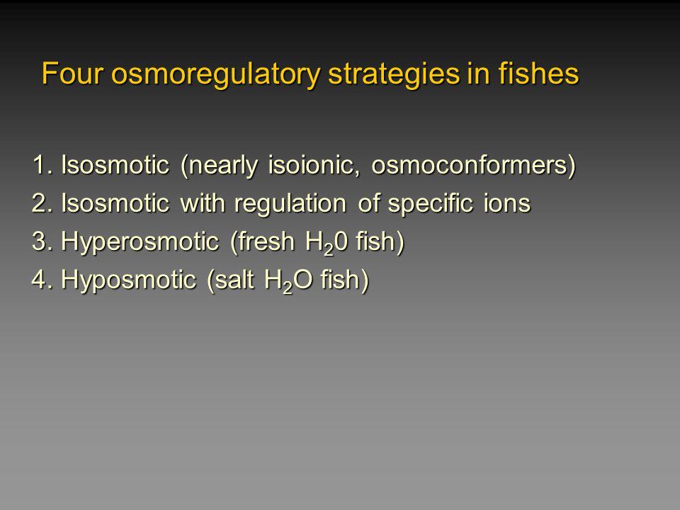 Osmoregulation Strategies Osmoconforming (no strategy) Hagfish internal salt concentration = seawater.