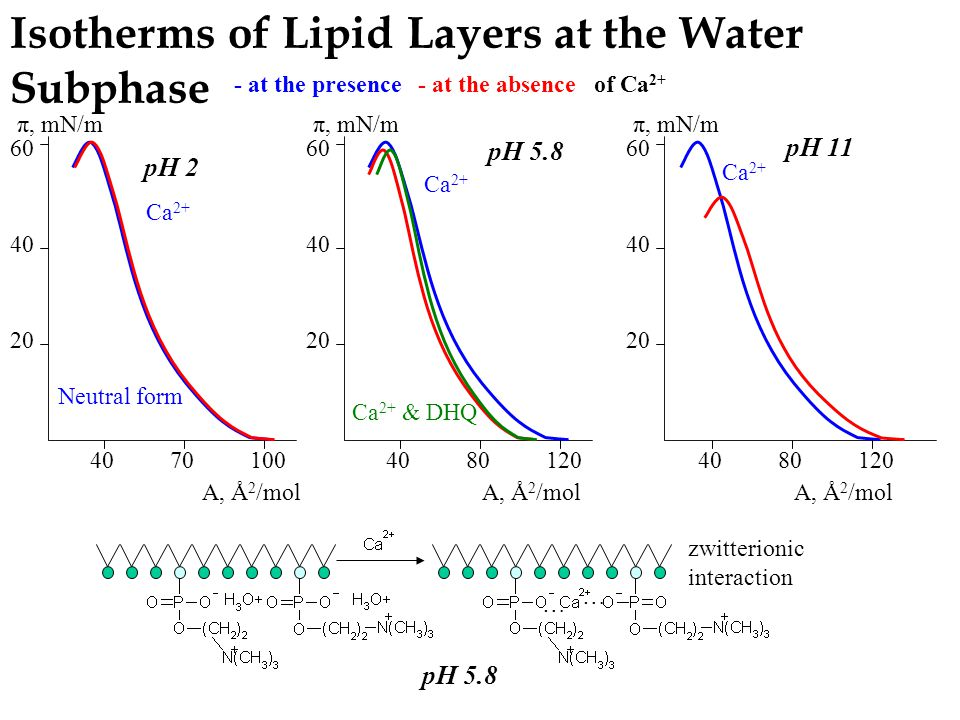 Isotherms of Lipid Layers at the Water Subphase zwitterionic interaction 20 40 60 π, mN/m 20 40 60 π, mN/m 20 40 60 π, mN/m 4070100408080120120 8080120120 Ca 2+ & DHQ Ca 2+ A, Å 2 /mol pH 2 pH 5.8 - at the absence- at the presenceof Ca 2+ pH 11 Ca 2+ … … pH 5.8 Neutral form