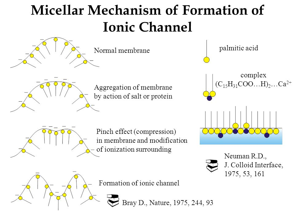 Micellar Mechanism of Formation of Ionic Channel Normal membrane Aggregation of membrane by action of salt or protein Pinch effect (compression) in membrane and modification of ionization surrounding Formation of ionic channel  Bray D., Nature, 1975, 244, 93 Neuman R.D., J.