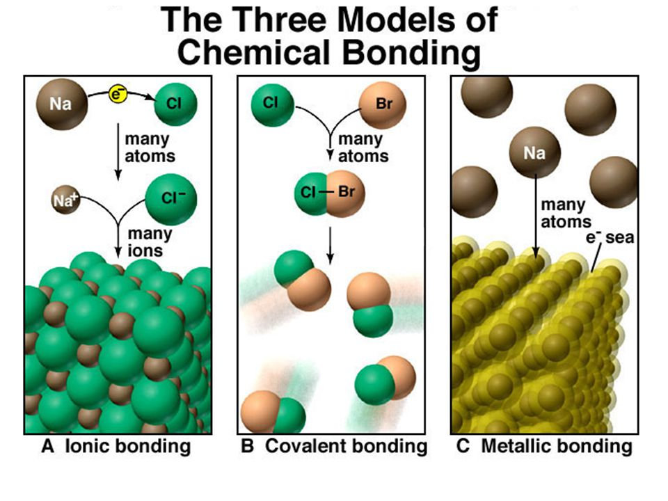 Transition metals form several ions.