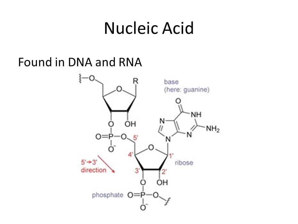 Nucleic Acid Found in DNA and RNA