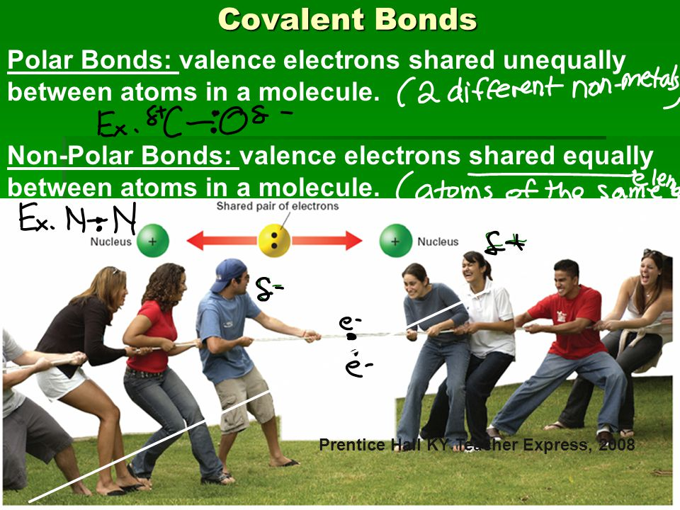 Covalent Bonds Covalent Bonds Prentice Hall KY Teacher Express, 2008 Polar Bonds: valence electrons shared unequally between atoms in a molecule. Non-