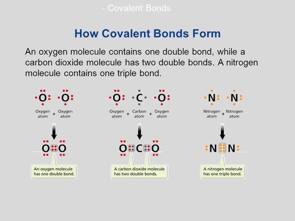 - Covalent Bonds How Covalent Bonds Form An oxygen molecule contains one double bond, while a carbon dioxide molecule has two double bonds.
