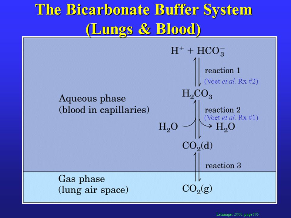 The Bicarbonate Buffer System (Lungs & Blood) Lehninger 2000, page 105 (Voet et al.