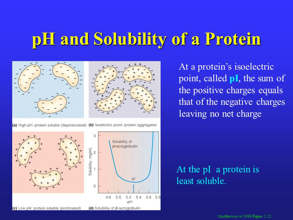 pH and Solubility of a Protein Matthews et al 1999 Figure 2.21 At a protein's isoelectric point, called pI, the sum of the positive charges equals that of the negative charges leaving no net charge At the pI a protein is least soluble.