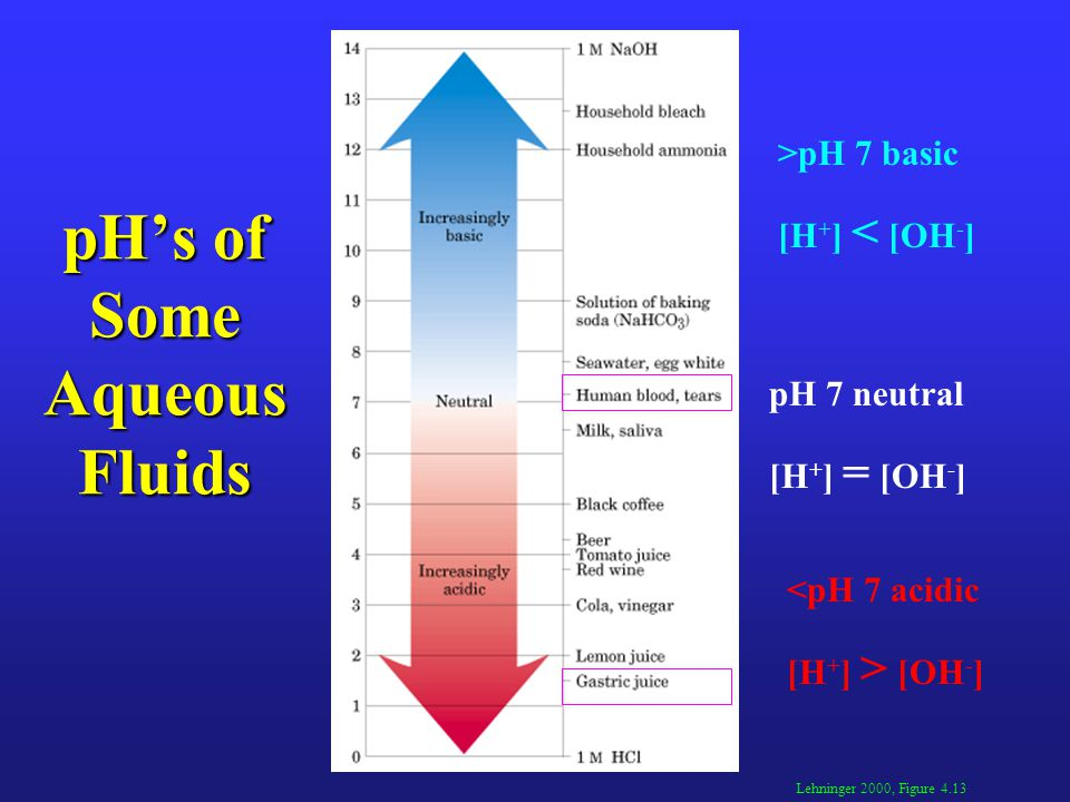 pH's of Some Aqueous Fluids Lehninger 2000, Figure 4.13 >pH 7 basic [H + ] < [OH - ] pH 7 neutral [H + ] = [OH - ] <pH 7 acidic [H + ] > [OH - ]