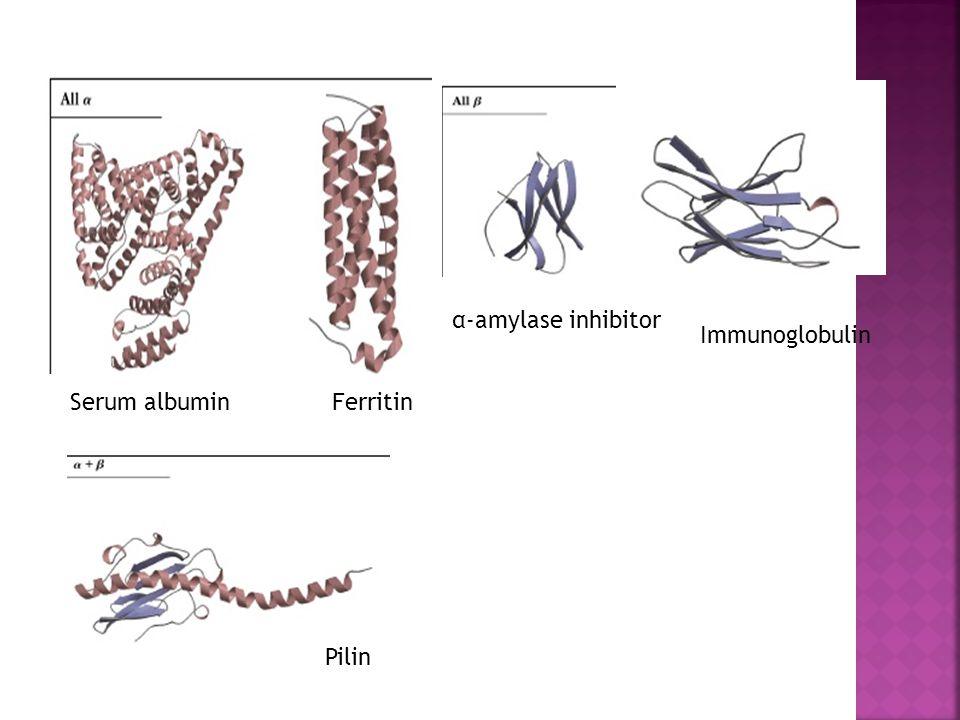Serum albuminFerritin α-amylase inhibitor Immunoglobulin Pilin