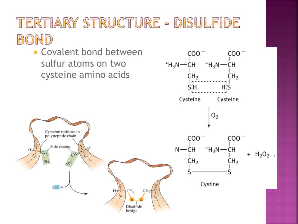  Covalent bond between sulfur atoms on two cysteine amino acids